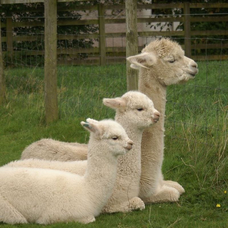 Reflecting on the Summer and 2017 Cria
