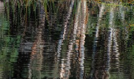 Bamboo reflection Busselton