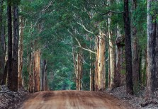 Boyanup forest drive