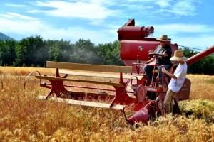 Harvest at Clover Creek