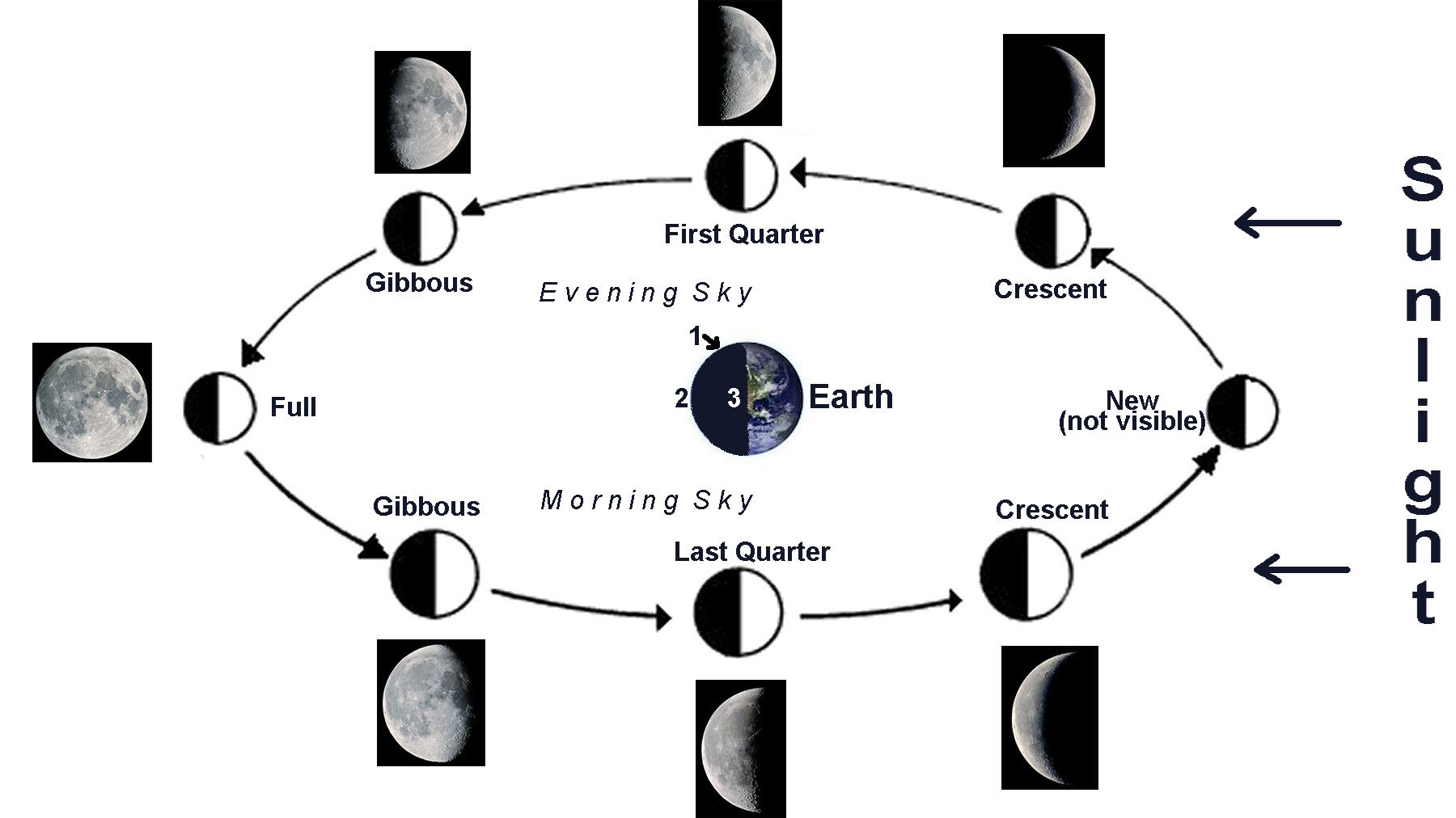 Related Keywords Amp Suggestions For Lunar Cycle Diagram