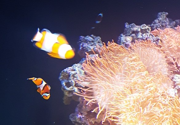 Nemo and his dad at Lisbon Oceanarium - Things to Do in Lisbon, Portgual, travel blog by BeckyBecky Blogs