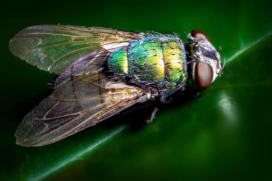 Problème de mouches