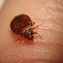Can Dog Fleas Live In Sofas Air Sofa Bed Kmart How To Get Rid Of Ticks And Bugs Home Safe