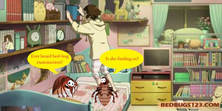Bed bugs extermination professional and home types of it bed bugs extermination solutioingenieria Images
