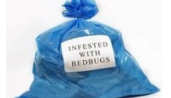 Can a mixture of alcohol and ammonia kill bedbugs?