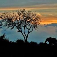 Il viaggio: due donne siciliane alla scoperta del Kenya