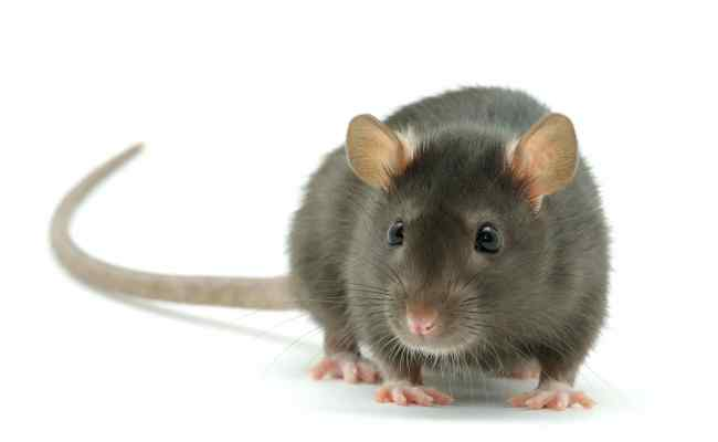 Pest Facts Bedford County Pest Control