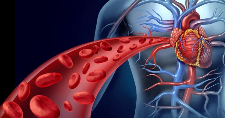 De nombreuses personnes ont une mauvaise circulation sanguine et cela est dû en parti à une mauvaise alimentation et également le fait de fumer. Améliorer votre flux sanguin ne sera alors que positif car personne n'a une circulation parfaite.