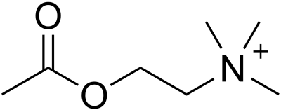 acétylcholine mémoire