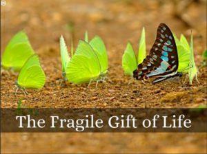 fragilelife