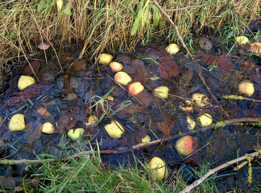 apples04dec15
