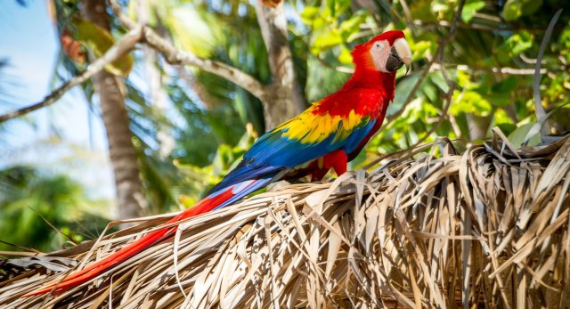 colourful parrot you can find in Costa Rica eco holidays