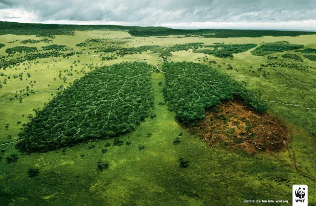 deforestation-lungs-wwf