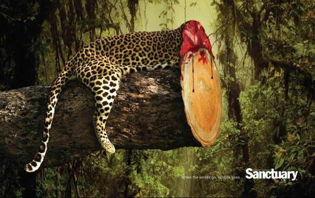 deforestation-kills-wildlife-sanctuary