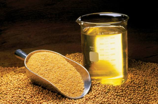 soy-beans-soy-oil