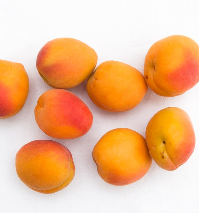 ApricotAmarettiFool_ApricotsSquare
