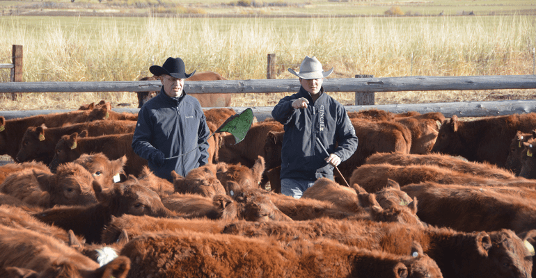How to set up an equitable cow lease arrangement | Beef Magazine