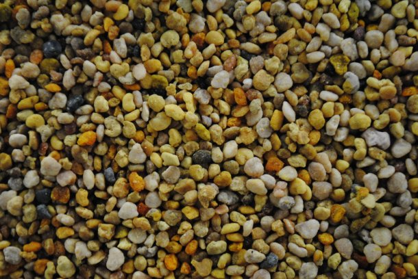 What is Bee Pollen 1
