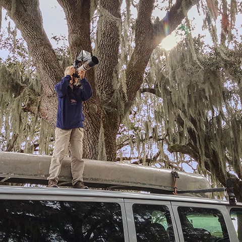 Nancy at Lake Wailes Park taking pictures of great horned owl chicks in a nest in the fork of a tree.