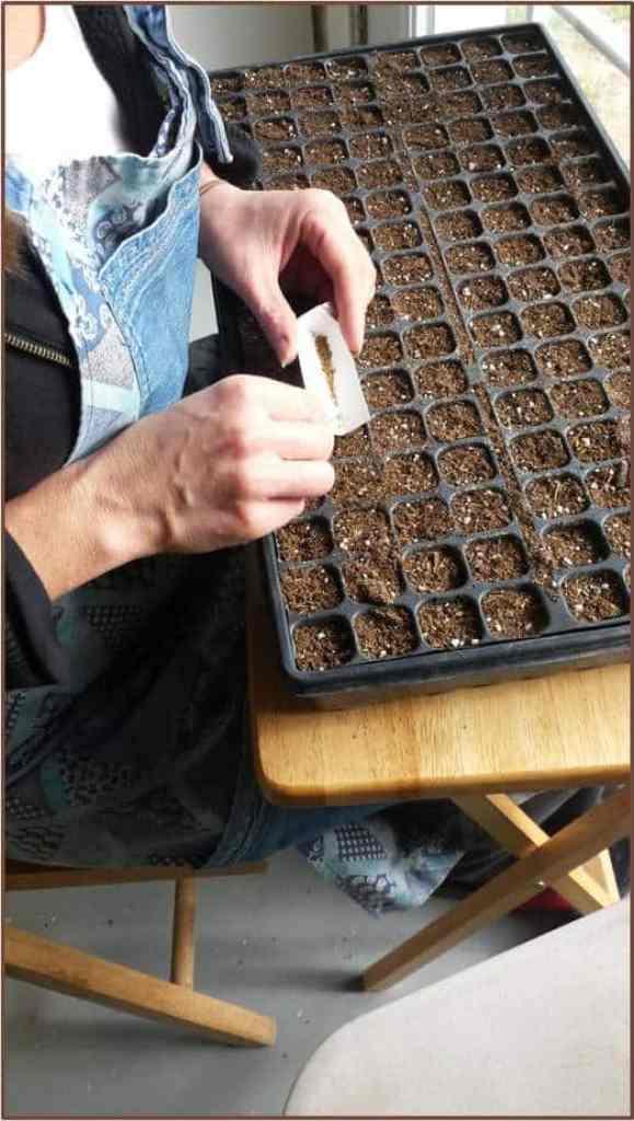 seeding 7