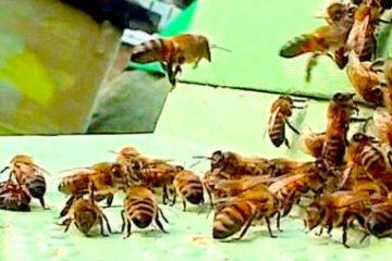#BeehiveYourself #WantageHoney Honeybees