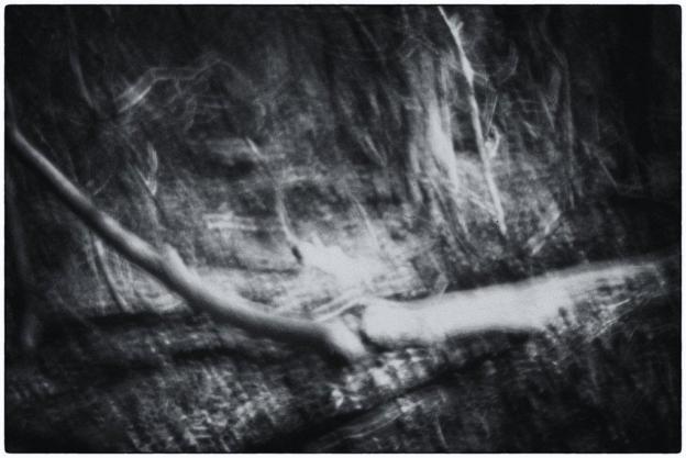 Abstract Trees & Bushes (Pinhole)