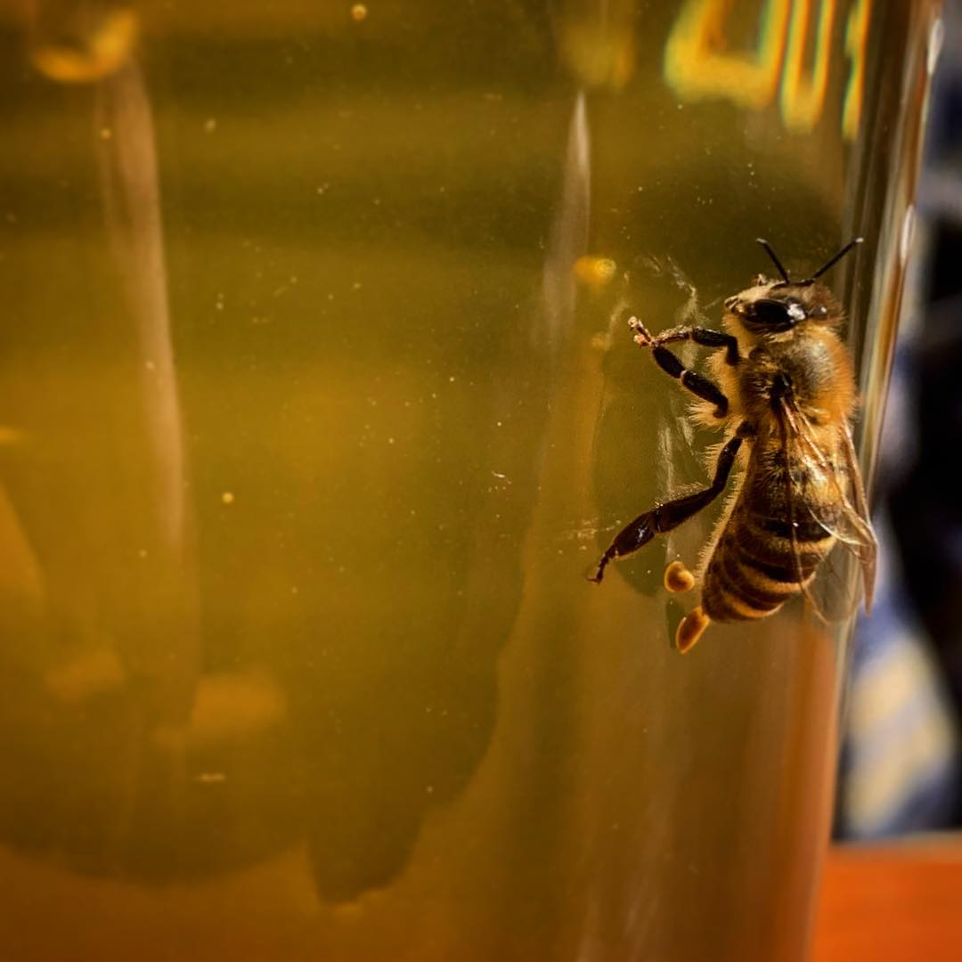 Does a bear shit in the woods? I dunno. But this bee shit on my beer