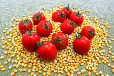 Corn and Tomatos