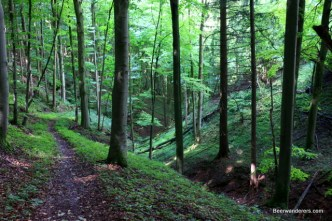 lush hiking trail