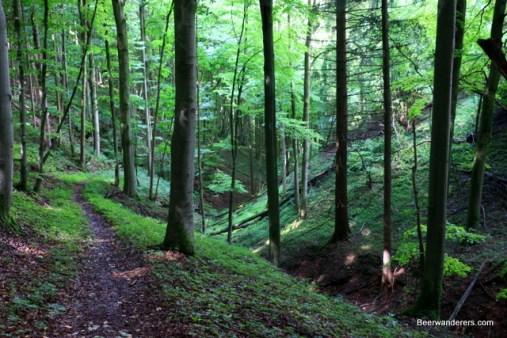 lush hiking trail
