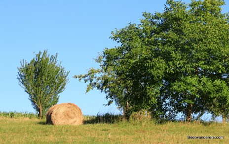 rolled hay