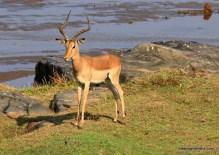impala river