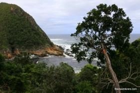 lush coast