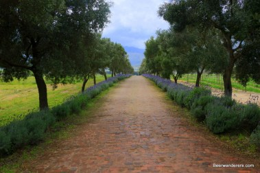 street lined by lavender