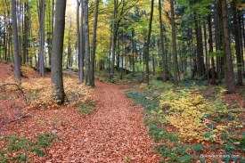 trail with leaves