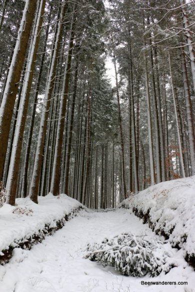 tall trees on snowy trail