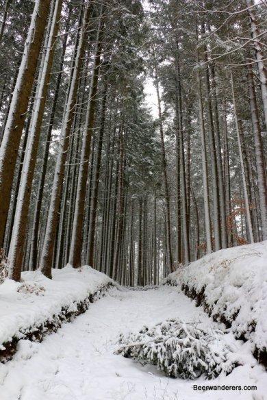 tall trees on snowy trail