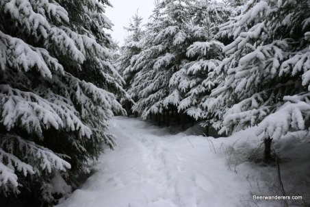 snow trail with snow covered trees