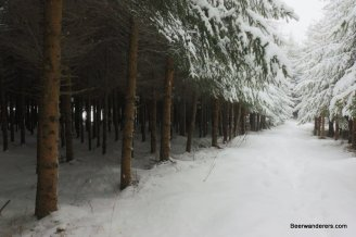 enchanted snowy forest