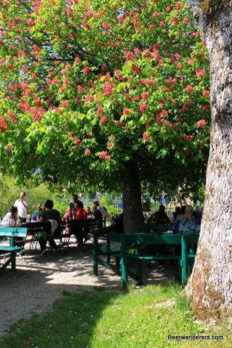 biergarten with chestnut tree