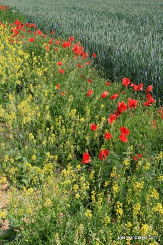 flowers next to field of crops
