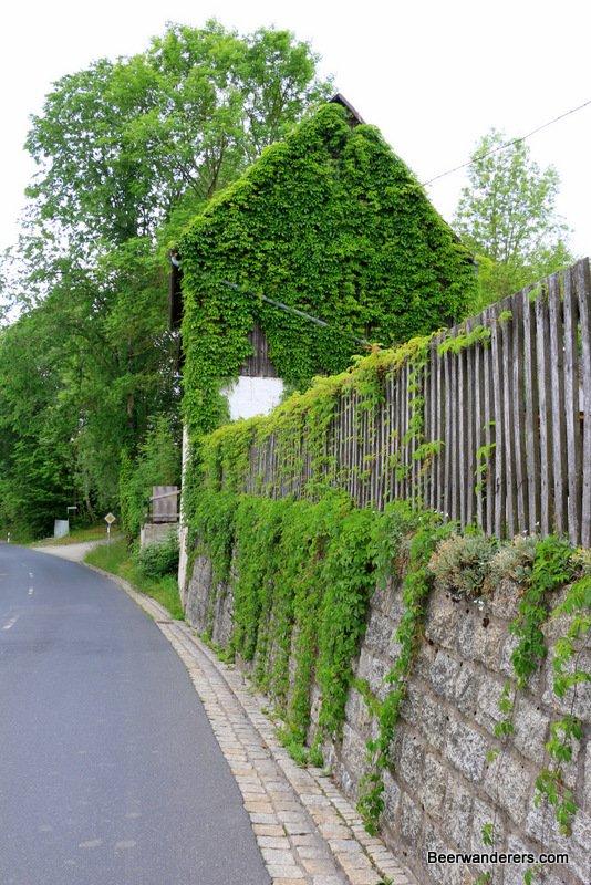leaf-covered building