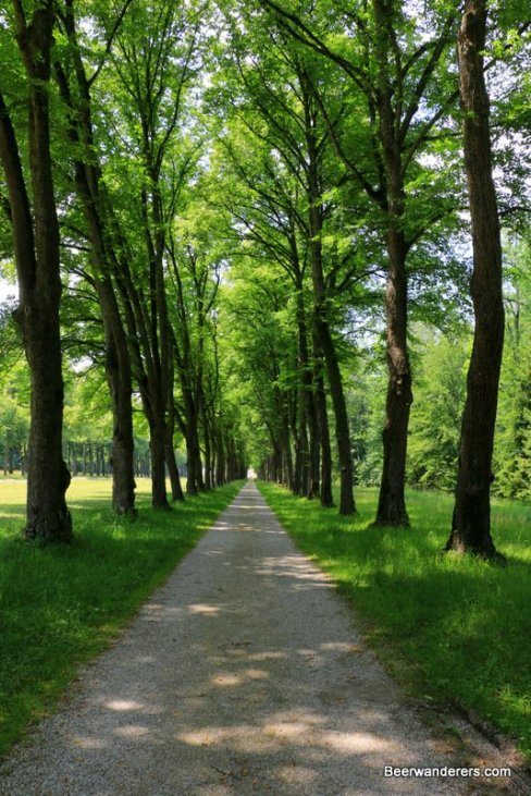 long narrow path flanked by trees