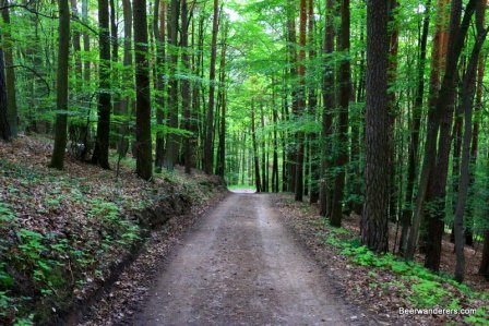 lush forest trail