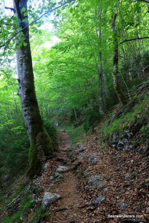 mountain trail in forest