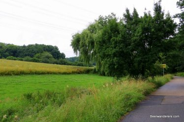 country road with lush meadow