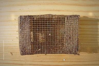 Κουτί μεταφοράς βασίλισσας τύπου miller 3