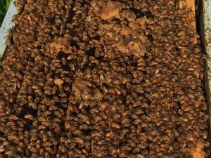 Bee Builder Protein Patty