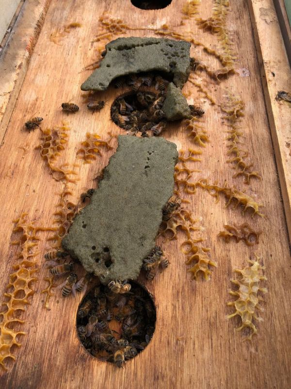 Sugar cake on feeder board